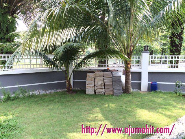 pokok kelapa dah berbunga