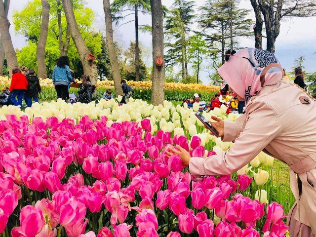percutian musim bunga arba travel